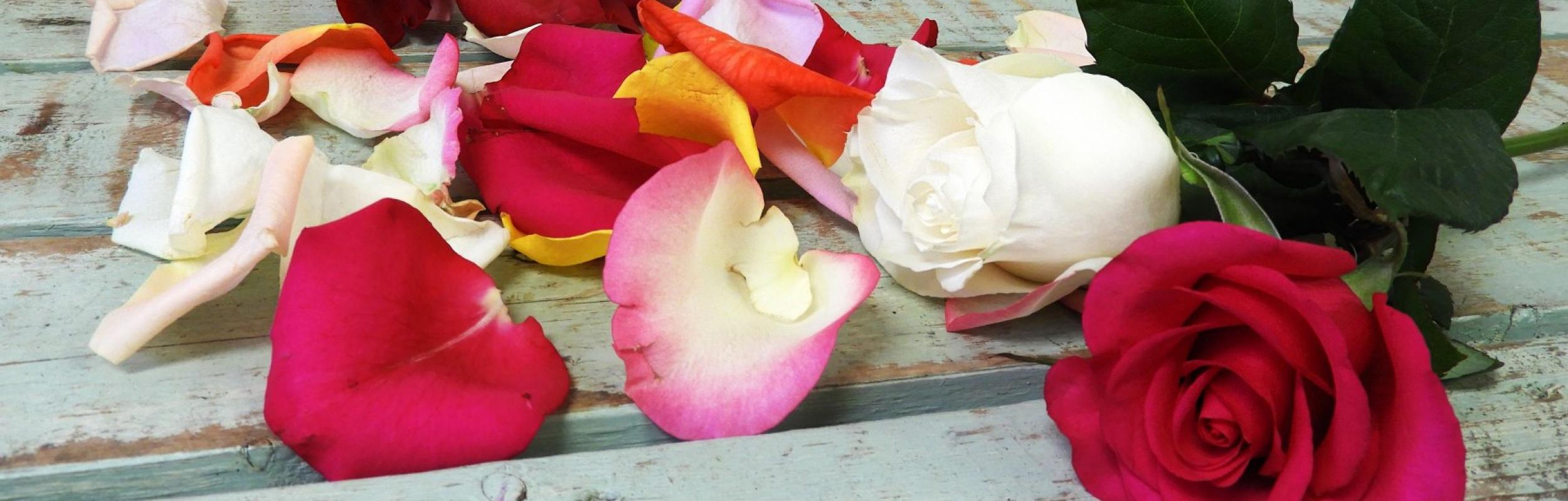 Rose Petals – 1